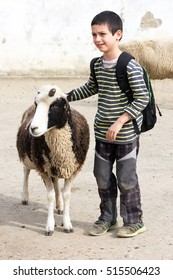 Child petting sheep at farm or zoo.