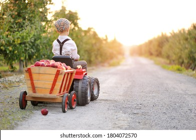 Child picking apples on a farm in autumn.