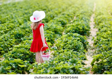Child picking strawberry on fruit farm field on sunny summer day. Kids pick fresh ripe organic strawberry in white basket on pick your own berry plantation. Little girl eating strawberries. - Shutterstock ID 1936914646