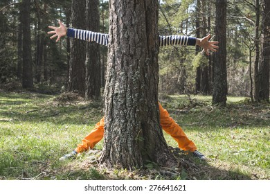 Child play in the forest hidden behind a tree