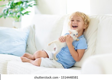 Child playing with baby cat. Kid holding white kitten. Little boy snuggling cute pet animal sitting on couch in sunny living room at home. Kids play with pets. Children and domestic animals.