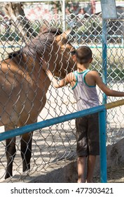 Child with pony in the mini zoo