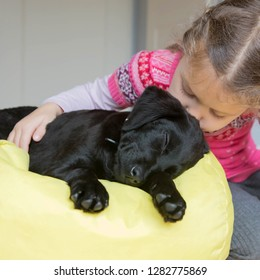 Child and puppy kiss. Animal care concept. Pet dog labrador and little girl love each other and play together. Dog man's best friend.