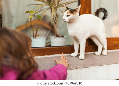 Child reaching to catch spoiled cat