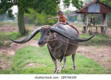 child riding a buffalo