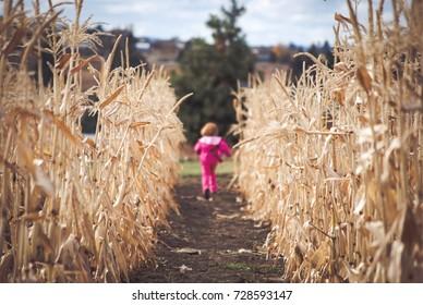 child running through field of corn stalks in the fall