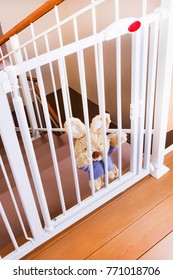 A child safety gate and stairs