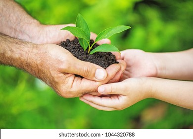 Child and senior man holding green plant in hands. Ecology concept