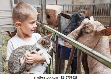 child shows a kitten to the curious goats