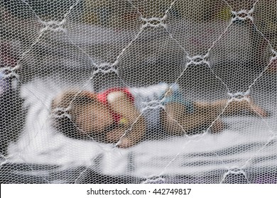 Child sleeping under mosquito net ,provides mosquito nets to protect evacuees from dengue fever (selected focus on net)