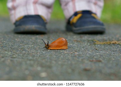 the child is standing on the road, slug creeps in front of him.