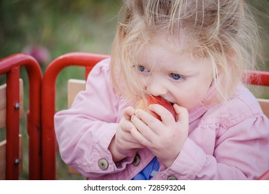 Child taking a bite out of a hand picked apple during fall harvest