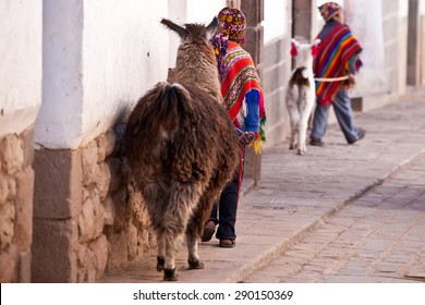 Child in traditional clothes with lama walking  Cuzco street - Peru