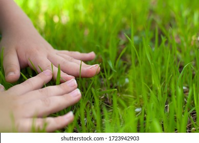 Child two hands touch green grass closeup view with copy space . Love nature. Enjoy spring summer yard. Children people