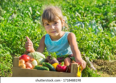 Child with vegetables in the garden. Selective focus.