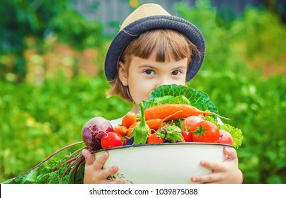 Child and vegetables on the farm. Selective focus.