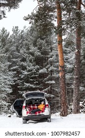 Child waiting parents in car trunk for luggage. Laying inside of vehicle with opened side and back doors. Winter evergreen forest with pines
