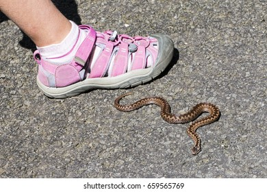 child walk close of poison snake
