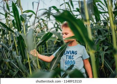 child walking through corn field