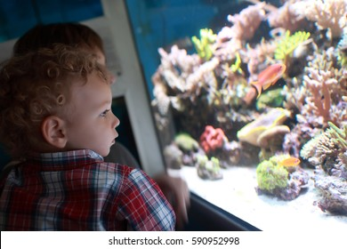 Child is watching the fishes in aquarium