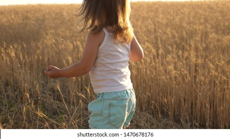 child with wheat in hand. baby holds the grain on the palm. a small kid is playing grain in a sack in a wheat field. farming concept. little son, the farmer's daughter, is playing in the field.