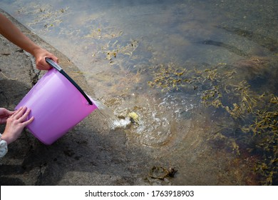 Childen fishing crabs in the ocean and put the crabs in a bucket. Later on they set the crabs free.
