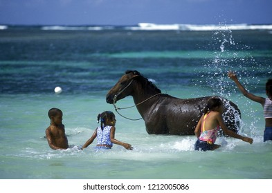 childern play with a horse at the beach at the Village of Las Terrenas on Samana at Dominican Republic in the Caribbean Sea in Latin America.  Dominican Republic, Samana, April, 2006