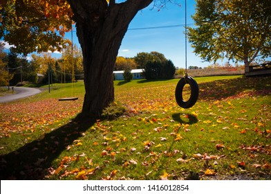 Childhood nostalgia image of a tire swing and a chair swing hanging from a tree on a sunny fall afternoon.