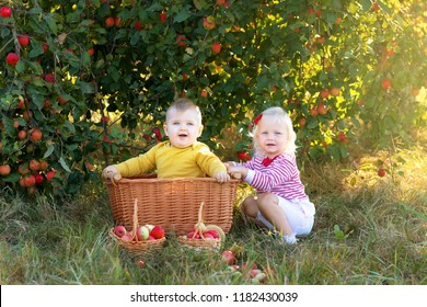 Children with apples in baskets in the apple orchard