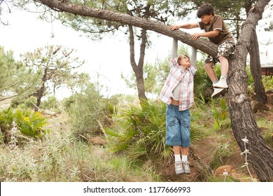 Children boys in pine tree forest climbing tree trunk in countryside, exploring discovery fun, growing up together outdoors. Kids games, leisure recreation lifestyle. Summer holiday adventure.