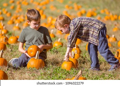 children choose pumpkins on the farm field. pumpkin patch. harvesting. preparation for Halloween