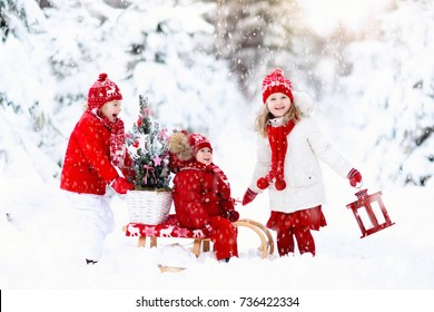 Children with Christmas tree on wooden sled in snow. Kids cut Xmas tree. Boy and girl on sledge in snowy forest. Brother and sister select winter holidays decoration. Child with sleigh. Kid sledding.