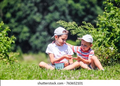 children eat raspberries on a farm.  boys share berries. copy space for your text