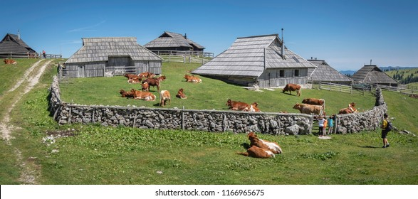 Children with father admire cows resting near cottage on Velika planina (Big Pasture Plateau), Kamnik, Slovenia