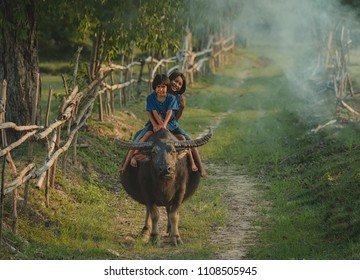 The children are funny with buffalo,smiling face of a little girl in country asia.Thai Upcountry Culture,Occupation concept.