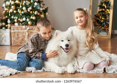 children girl and boy with a Samoyed dog on a Christmas background with gifts and Christmas tree