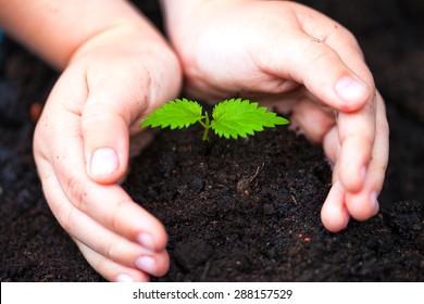 Children hands around green young plant.