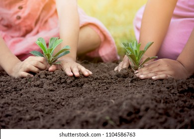 Children hands planting young tree on black soil together as save world concept