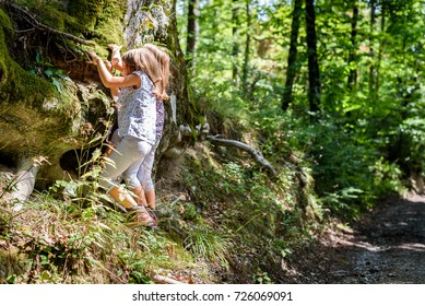 Children hiking in mountains or woods climbing the tree. Girls are playing and learning in the nature by climbing a tree on the side of the mountain road in a forest.