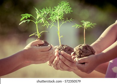 Children and parent holding young plant in hands as save world concept in vintage color tone