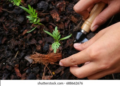 Children are planting seedlings on concept for Save world