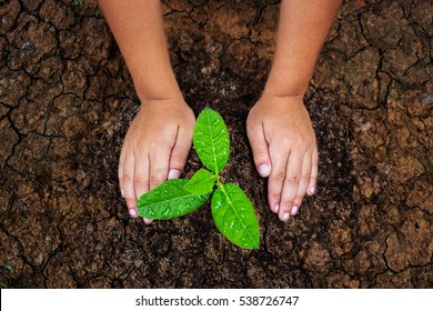Children planting trees to mitigate drought.