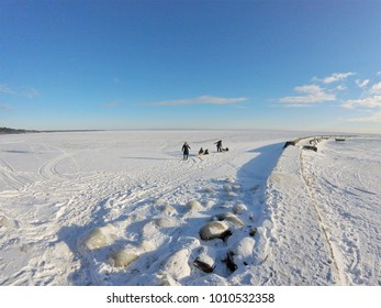 Children playing on ice with sleds in winter, in Nida, Kursiu Marios and Curonian Spit, Lithuania