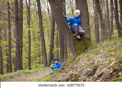 Children playing in spring forest between the trees.
