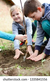 Children put a fertile land next to a young tree that has just been planted in the organic garden. Vertical.
