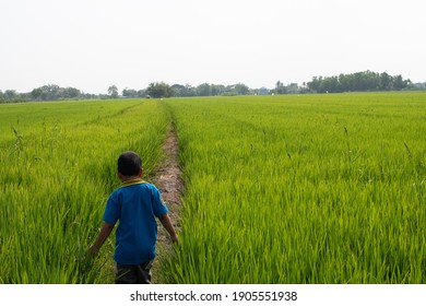 Children in the rice paddies house of their homes Children playing in rural fields of Asia