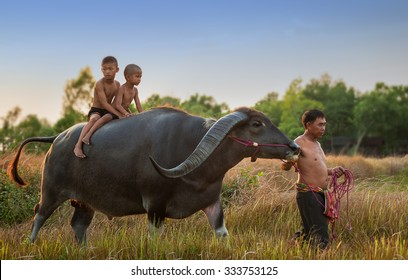 Children riding on a buffalo with father