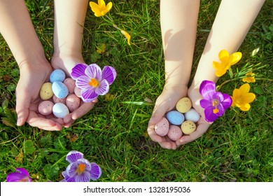 Children search and find Easter eggs.  Kid's hands are holding colourful small Easter candies sweet chocolate eggs on the background of green grass and spring crocus. Easter holidays concept.