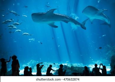 Children Silhouettes against Fish and Whale Shark in large Aquarium