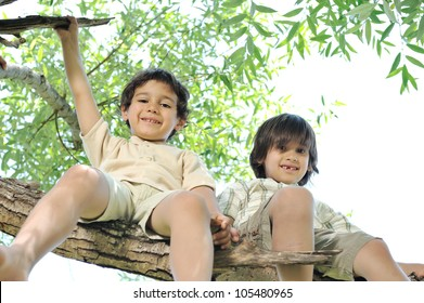 Children sitting on a branch of a tree